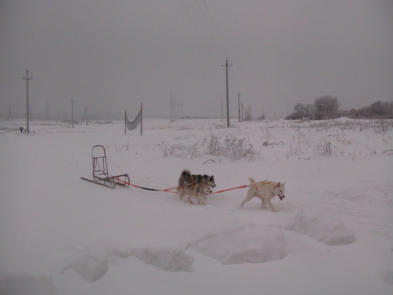 Шлейка Ездовая своими руками Dogs Еxclusive ВКонтакте 56