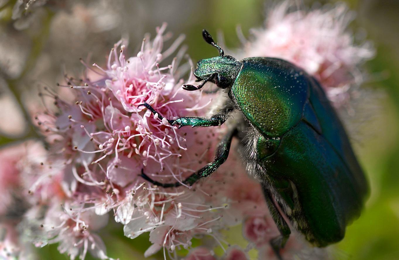 Цветы и жуки фото и названия